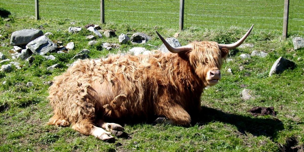 Whiskyreise Schottland